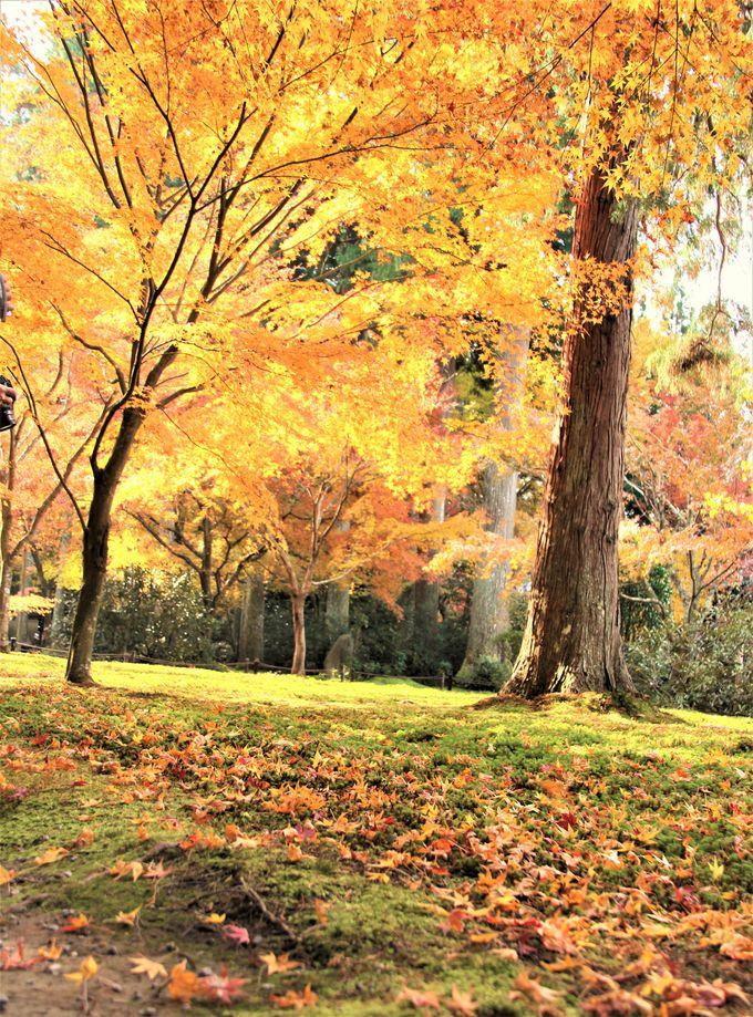 色鮮やかな紅葉が美しい!三千院の「往生極楽院」(本堂)