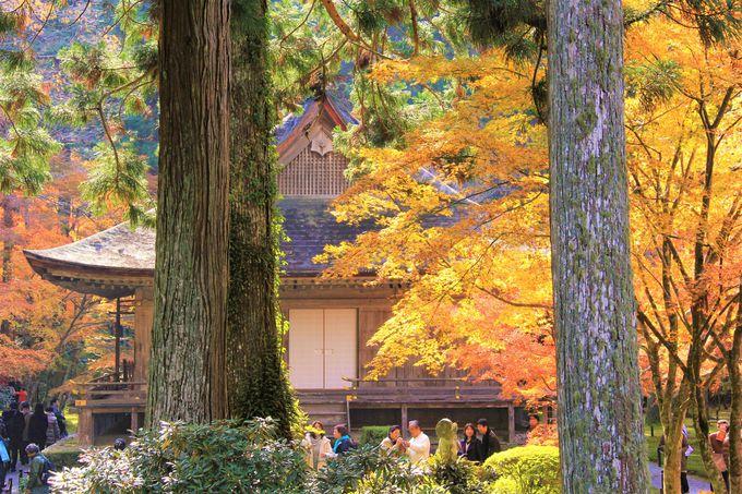 桜や紅葉名所!「京都・大原・三千院」の美しさとは?