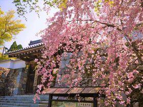 京都・最強パワースポット「京都・大原・三千院」観光で訪れる前に読んでおきたい最強ガイド