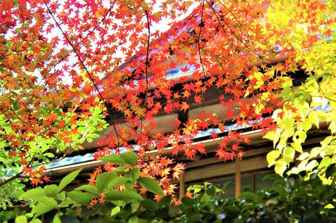 直指庵の愛逢い地蔵 季節の移ろい 風に舞う紅葉も詩情豊か