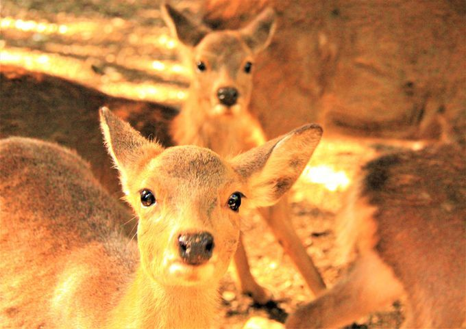 桜も紅葉も穴場!奈良観光は「奈良公園」と鹿だけでも楽しい
