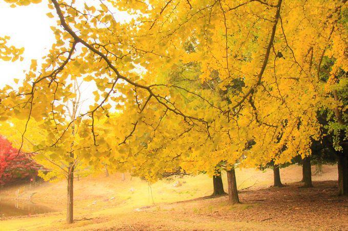 """""""奈良の一番桜""""「氷室神社」から、""""奈良の大仏""""「東大寺・南大門」〜紅葉の穴場「大仏池」へ"""