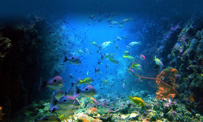 ピピ島で最高のタイ観光旅行を満喫!シュノーケリング・ダインビングもおすすめ