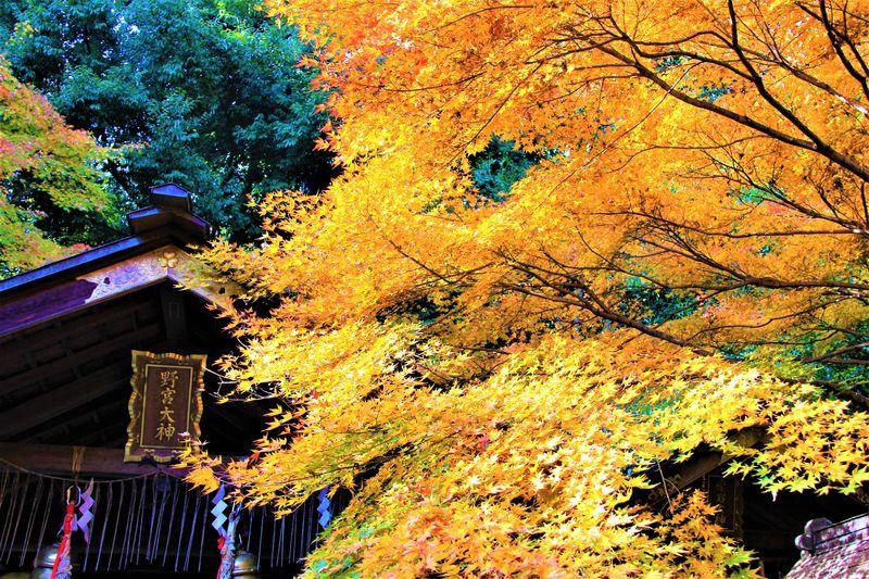 嵯峨野の穴場紅葉スポット〜「宝筐院」「野宮神社」「直指庵」