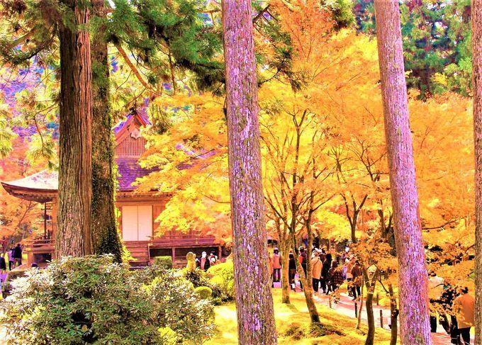 京都紅葉の名所!絶対おすすめの観光スポットは「東福寺」「三千院」「嵐山」