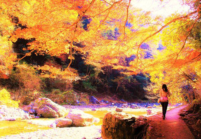 京都紅葉の穴場!奥嵯峨野から清滝〜「直指庵」「清滝(錦雲渓)」「神護寺」