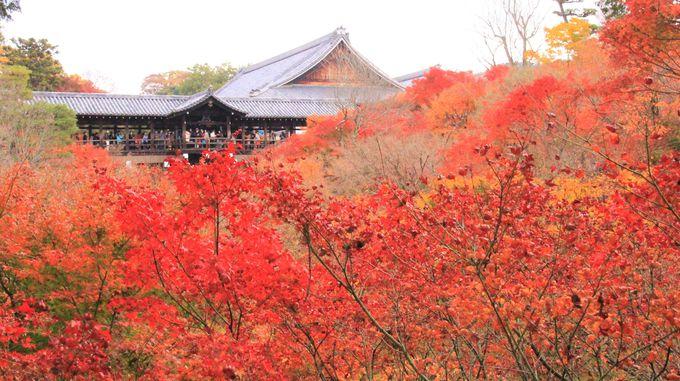 京都紅葉の名所!絶対おすすめの観光スポットは「嵐山」「永観堂」「東福寺」