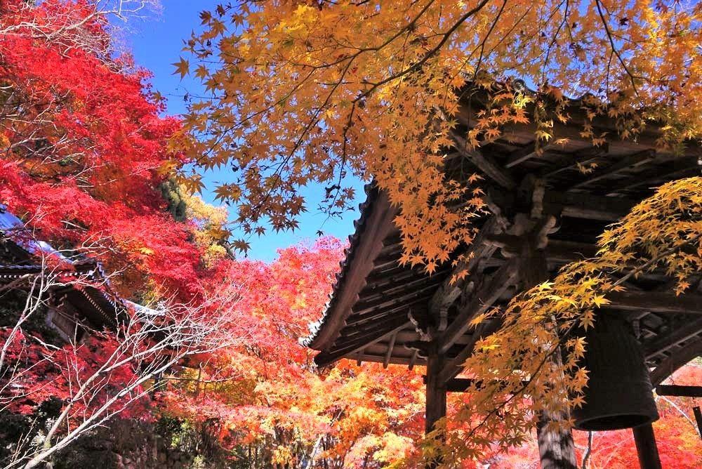 京都市郊外の紅葉穴場スポット〜「寂光院」「勝持寺」「玉雲寺」