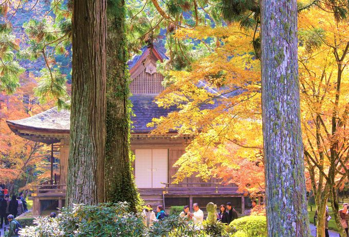 自然が美しい!京都山間部のおすすめ紅葉スポット〜「三千院」「貴船神社」「清滝」