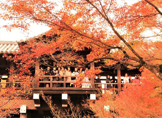 回廊から眺める紅葉は必見!絶対外せない紅葉スポット「東福寺」