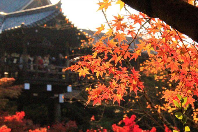 京都「東福寺」 紅葉の見どころは?「臥雲橋」「通天橋」の二つの回廊から眺める渓谷「洗玉澗」