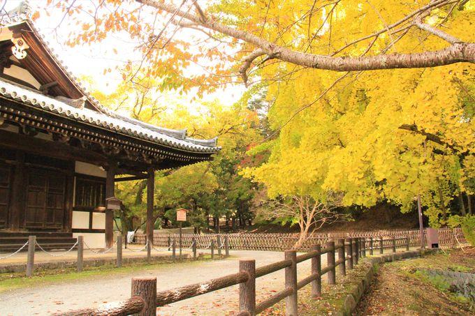 奈良 東大寺・二月堂へのアクセス、行き方〜大仏ホタル観賞、穴場の紅葉スポットも