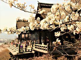 良縁・運気を掴む最強パワー!京都で人気の「縁結び社寺」5選