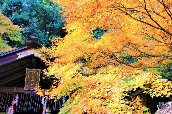 『源氏物語』の二人も訪れた恋の聖地【野宮神社・お亀石】