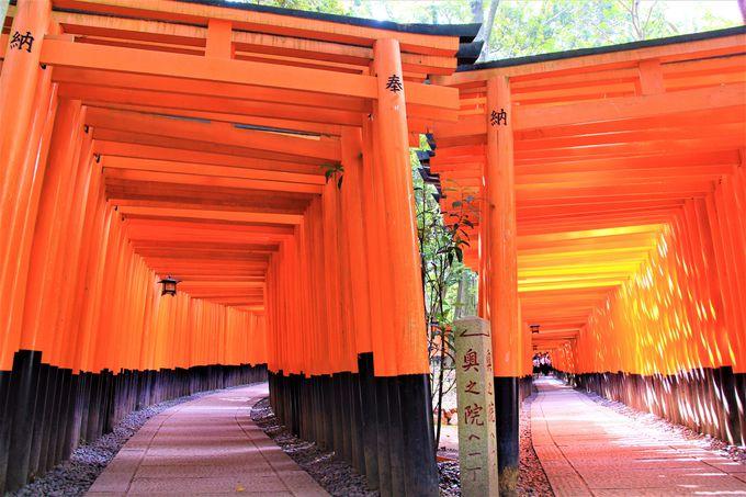 SNS映え、インスタ映え抜群!フォトジェニックな京都の風景!伏見稲荷大社の千本鳥居