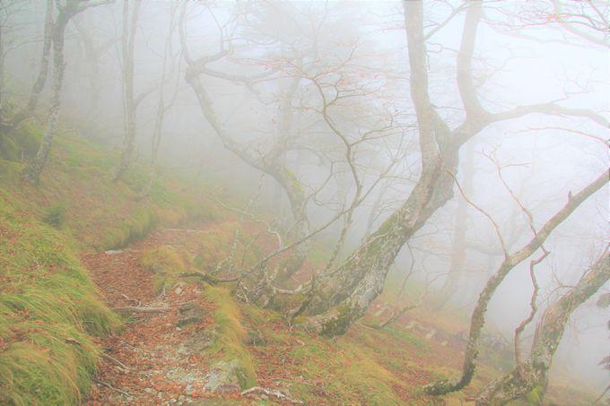 「聖宝ノ宿跡」はパワースポット!行者の霊魂に出会う不思議な体験