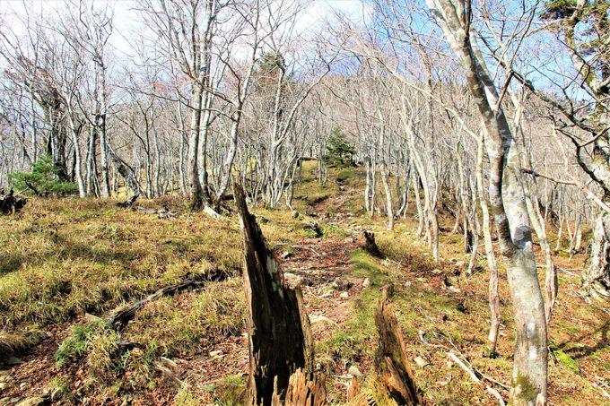 巡礼の道で臨死体験!「弁天の森」へ、ひとり自分自身に向き合う旅