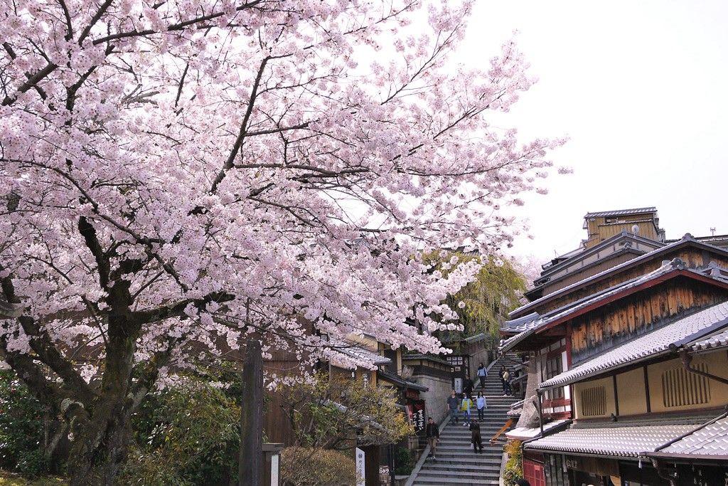 清水寺/地主神社/三年坂(産寧坂)