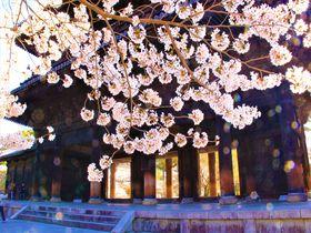 南禅寺から水路閣・インクラインへ~歴史の変遷たどる京の旅|京都府|トラベルjp<たびねす>
