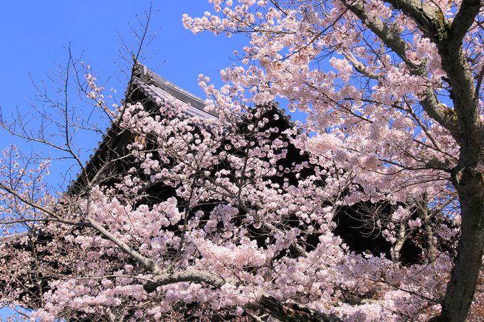 桜や紅葉の名所!臨済宗南禅寺派の大本山・京都「南禅寺」