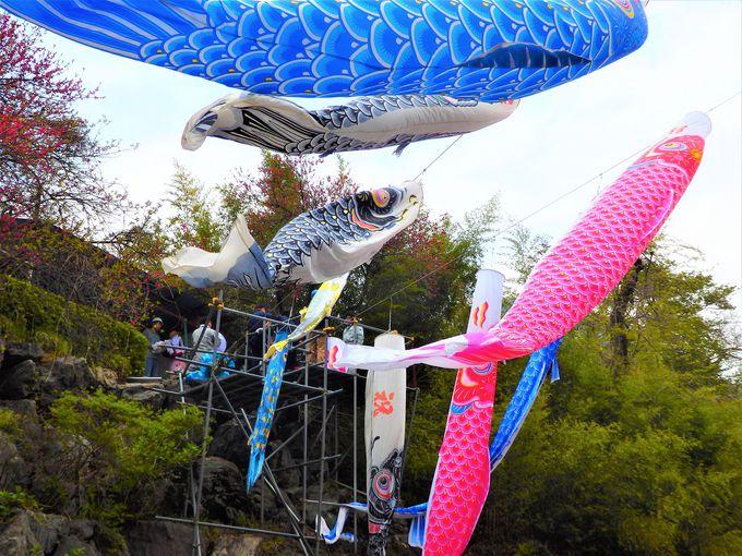 「かんな鯉のぼり祭り」は、こいのぼりでの地域活性化の元祖