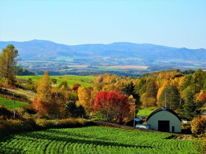 美瑛の紅葉#5 名もなき丘が一番美しい?