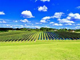 この絶景は日本のボルドー?能登ワインめぐりが意外とアツい!|石川県|トラベルjp<たびねす>