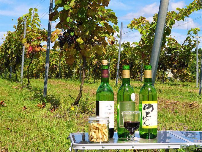 能登ワイン生産者とのブドウ畑ツアーは意外な演出がたっぷり