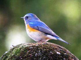 冬鳥シーズン到来!気軽に行ける関東の野鳥の楽園・群馬「庚申山」