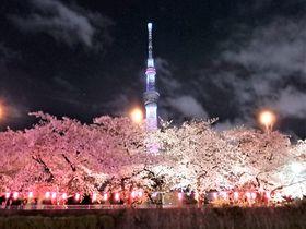 絶妙なコラボ!隅田川お花見屋形船で夜桜と東京スカイツリーの共演!