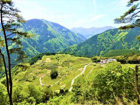 マチュピチュまでレンタサイクル?岐阜「天空の茶畑」はサイクリングが楽しい!