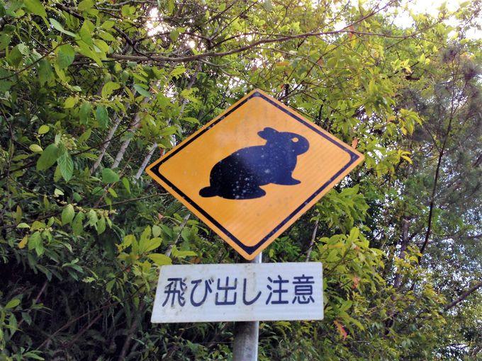 奄美大島ドライブは、厳しいアップダウンと絶景の連続
