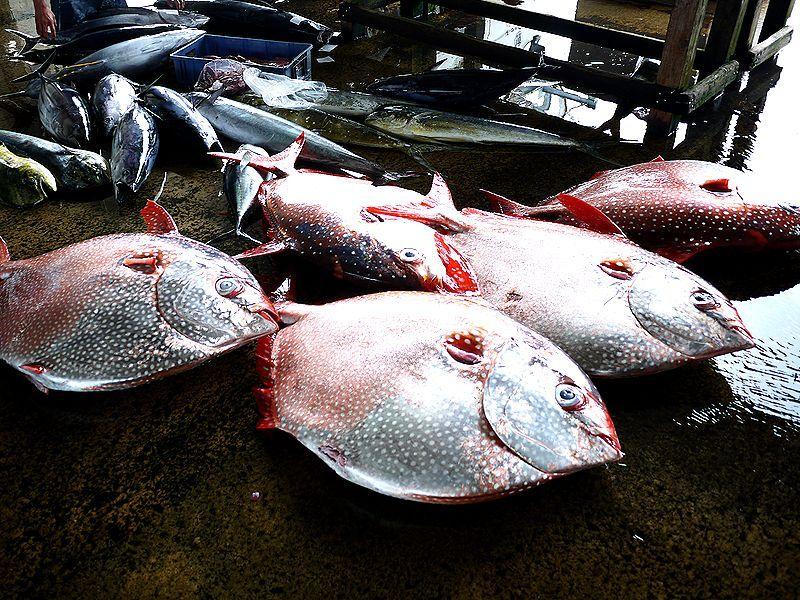 想像を絶する色鮮やかな魚介類に見惚れてしまうだろっ!