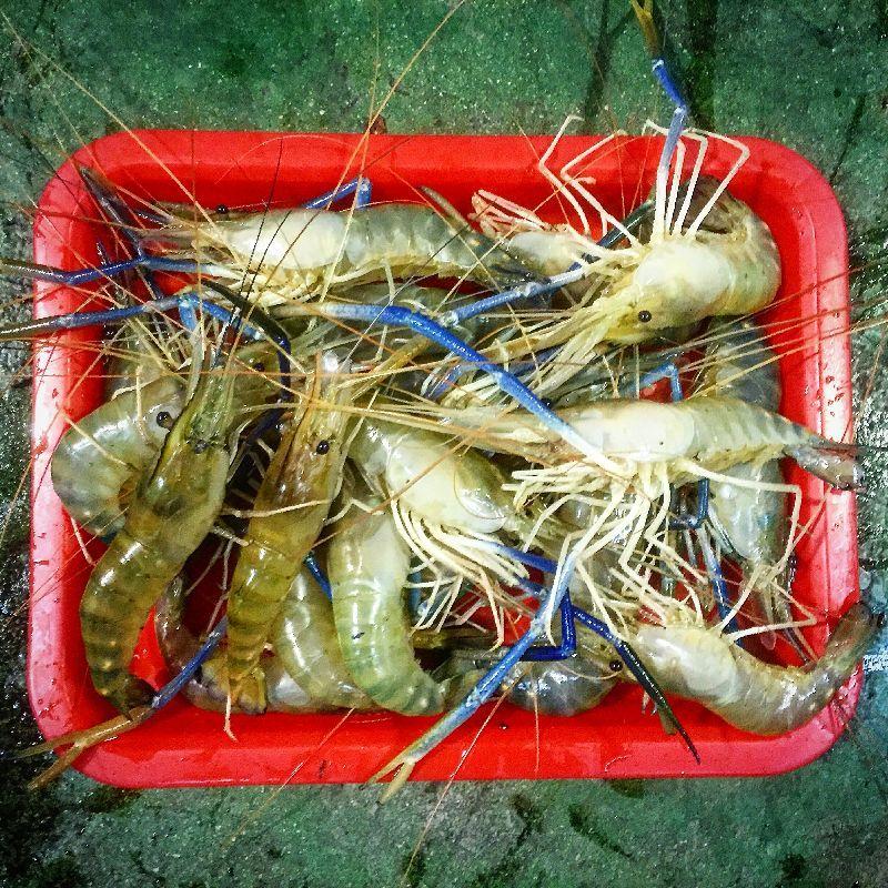 台湾庶民の娯楽「蝦釣り」後は、楽しい蝦料理を堪能せよ!