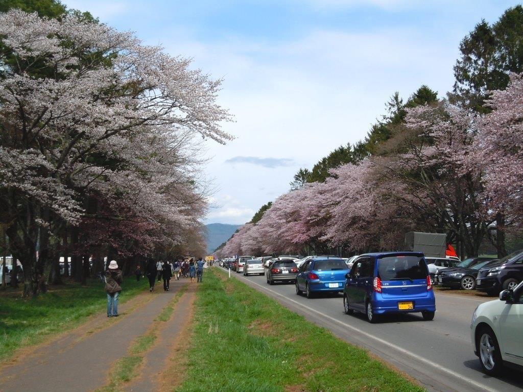 桜の名所「静内二十間道路桜並木」も!北海道新ひだか町の春を満喫しよう