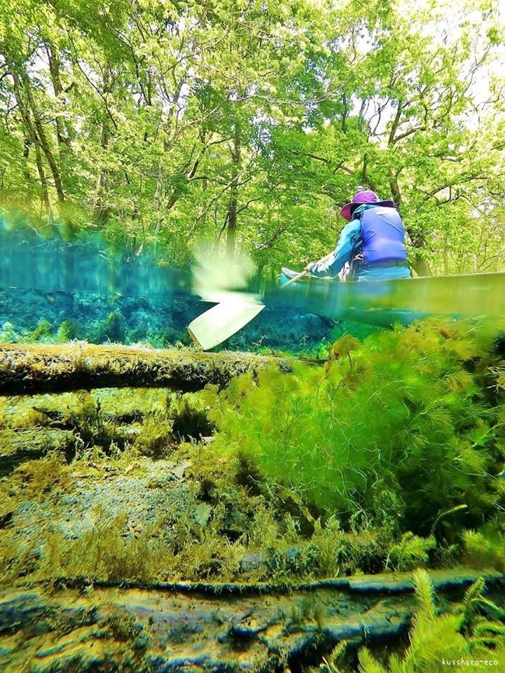 透明度抜群の「釧路川」源流をカヌーで下る