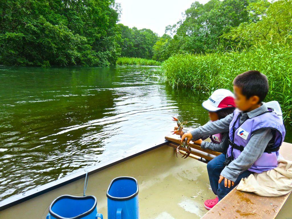 ザリガニや魚を捕まえて観察
