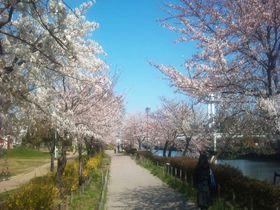名古屋一の「白鳥庭園」で花見散歩!地元ごはんとおもてなし茶席もおすすめ