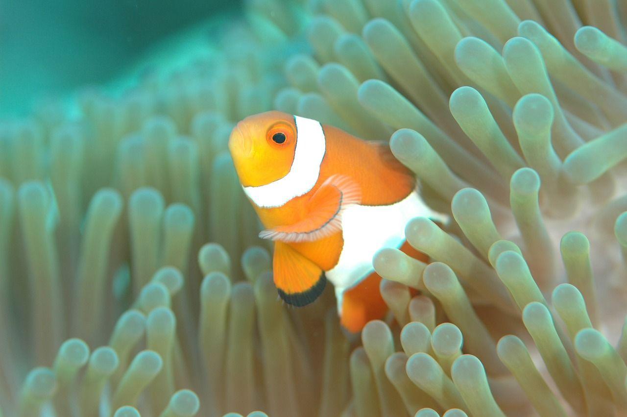 色とりどりの魚や珊瑚が生息する海と、ホテルの絶景