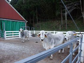 発祥の地は千葉だった!南房総市「酪農のさと」を散策。|千葉県|トラベルjp<たびねす>