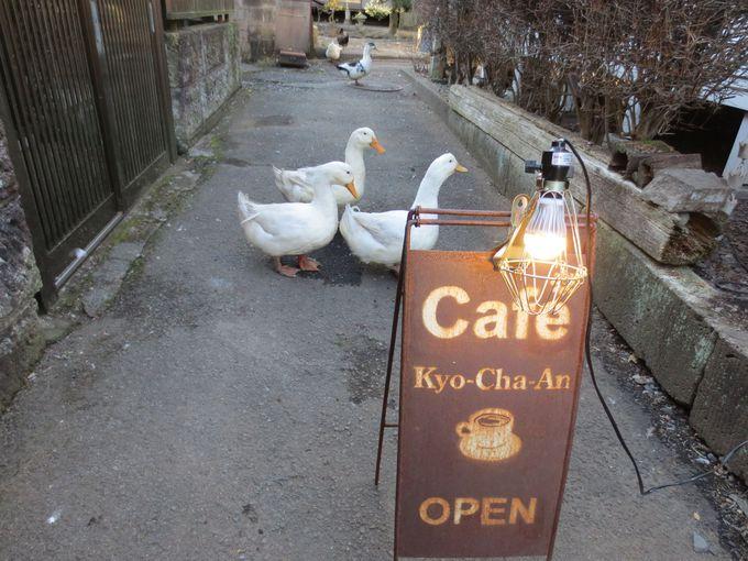 鹿沼市の名カフェ「Cafe'饗茶庵」と「ネコヤド商店街」。
