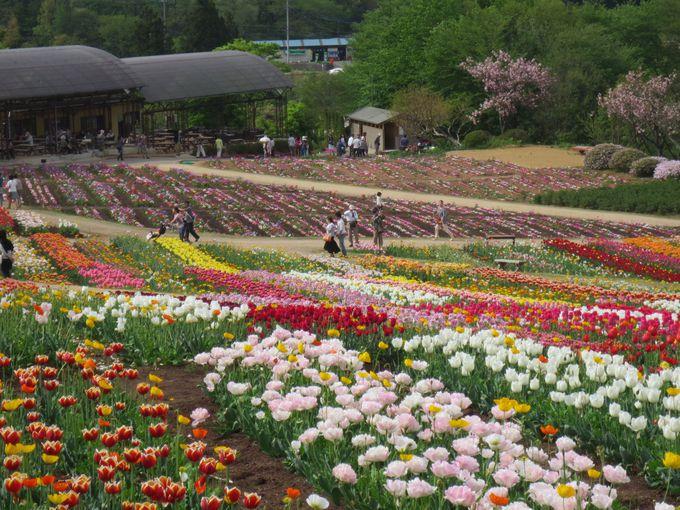 花々が咲き乱れる「美しき五月」