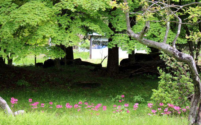 日光・赤沢川の水を引く小さな滝と池。