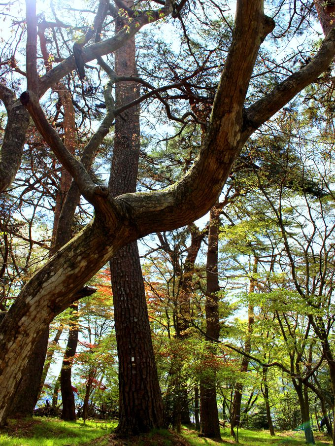 森林浴がおすすめの「庭園散歩」