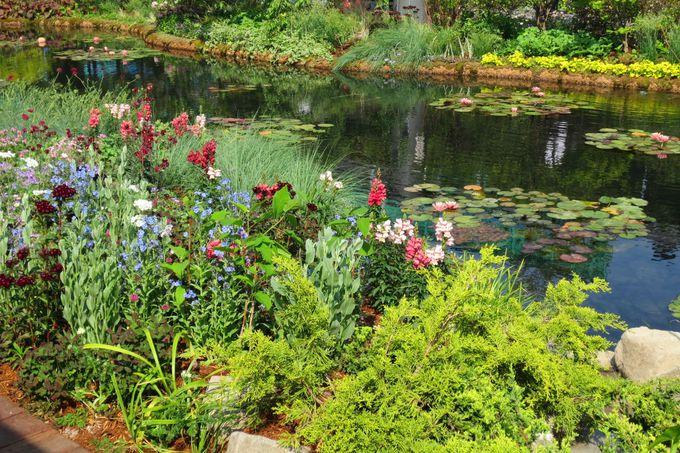 四季の花々が咲き乱れる睡蓮の池は、新しい都会のオアシス!