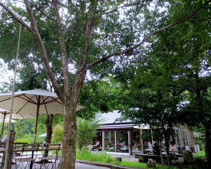 里山の寛ぎの隠れ家カフェ「何時も庵」!883歩の散歩道