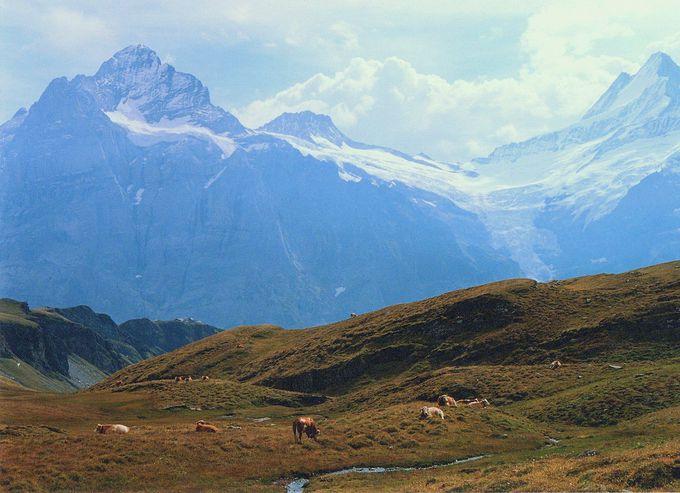 まるでハイジの世界!壮大な山々を望む放牧地。