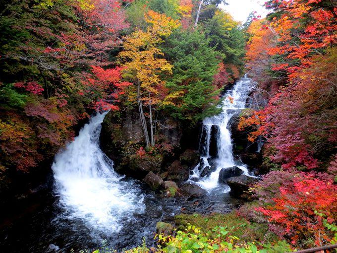 優美なその姿と紅葉の美しさで名高い「竜頭の滝」(栃木)