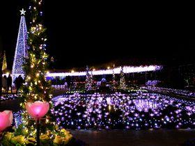 全国イルミネーション第1位&日本夜景遺産「あしかがフラワーパーク」のクリスマスイルミが圧巻!|栃木県|トラベルjp<たびねす>