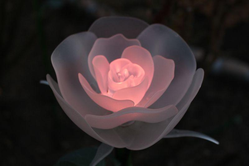 「あしかがフラワーパーク」だけでしか見られない!イルミネーションの花々の美しさの秘密!